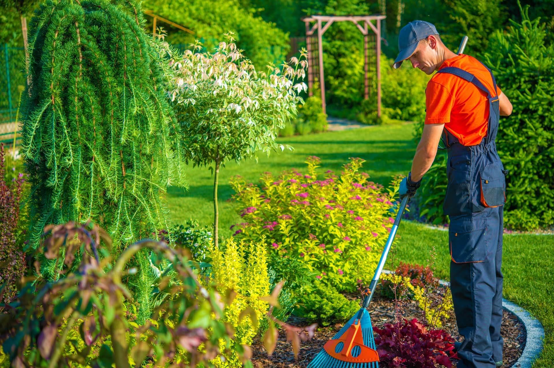 Gardenia Planting